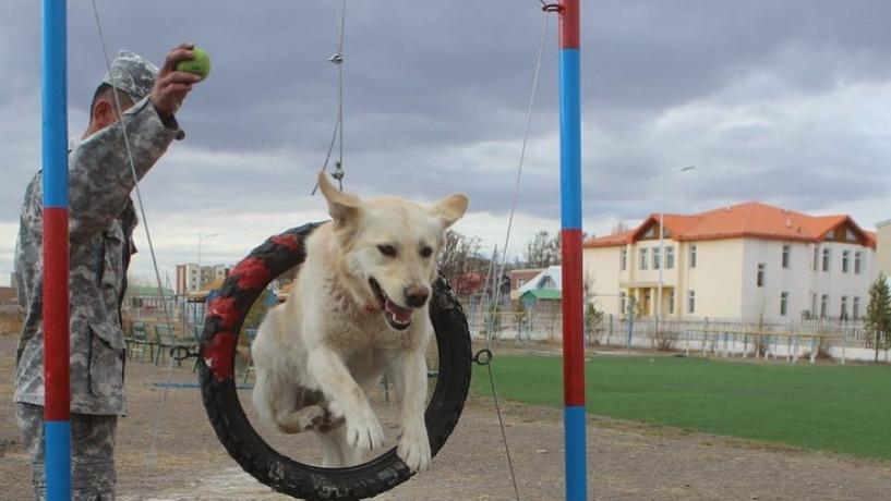 Булган аймаг аврагч нохойн сургалт, дадлагын талбайтай болжээ