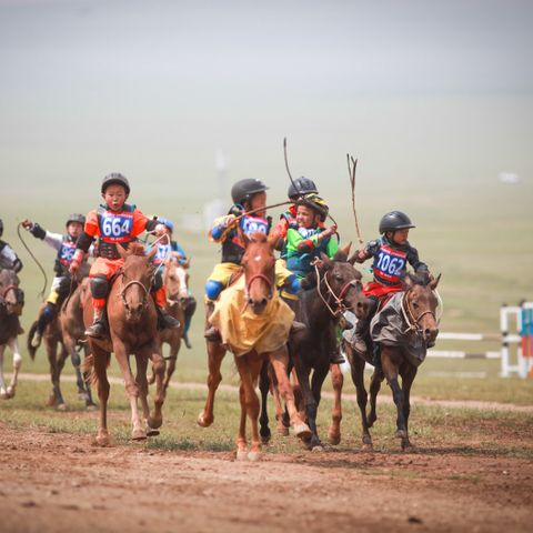 Үндэсний их баяр наадмын хязаалан насны морьдын уралдааныг хойшлууллаа