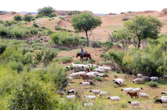 БНХАУ-д хандивласан 30 мянган хонины тухай баримтат кино аравдугаар сард нээлтээ хийнэ