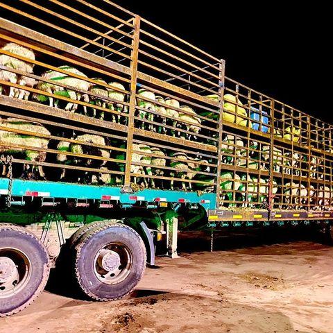 БНХАУ-д хандивласан 30 мянган хонины эхний 4000-г хилээр гаргалаа