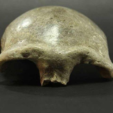 34 мянган жилийн өмнөх эртний хүний гавлын ясыг судлав