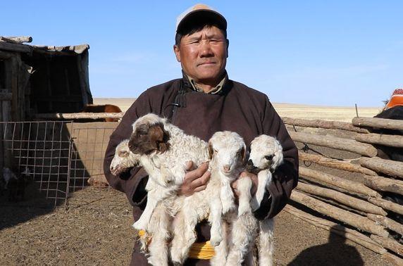 Говьсүмбэр аймагт 4 ихэр хурга мэндэлжээ