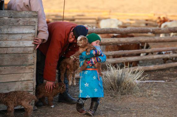 Төв аймгийн хэмжээнд 460-аад мянган толгой мал төллөжээ