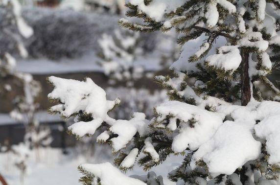 Зарим нутгаар ахиухан хэмжээний нойтон цас орно